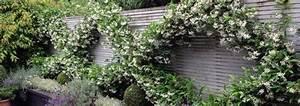 Kletterpflanzen Immergrün Winterhart : kletterpflanzen f r jeden garten ~ Markanthonyermac.com Haus und Dekorationen