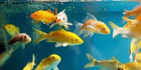 aquarium connect 233 quel mod 232 le faut il choisir pour ses poissons