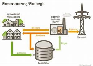 Wie Kann Man Energie Sparen : biomasse f r die gro stadt wie kann man biomasse in berlin nutzen deinclube ~ Markanthonyermac.com Haus und Dekorationen