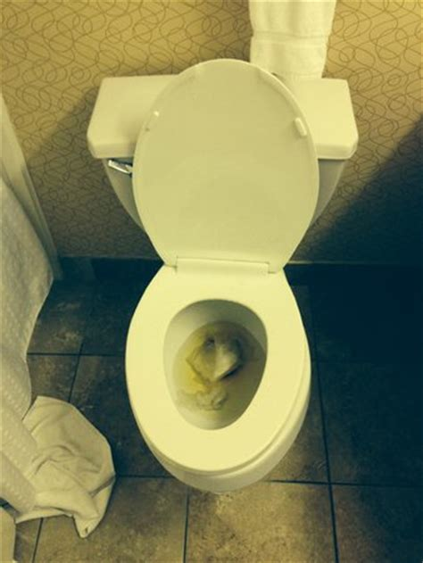 our stopped up toilet after two uses picture of best western plus philadelphia bensalem hotel