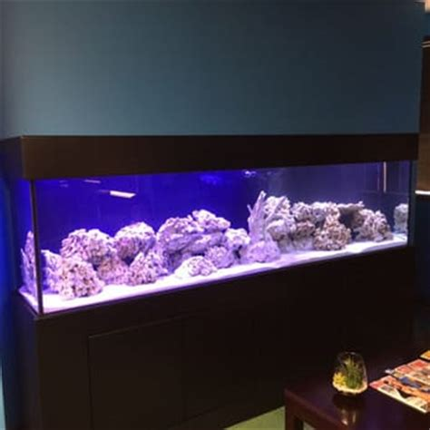 oceans aquarium 66 photos 53 reviews aquarium services beverlywood los angeles ca