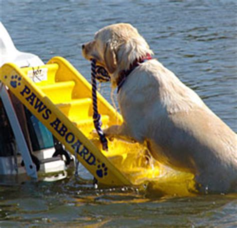 Boat Shop Dog dog boat ladder dog ladder for boat cozywinters