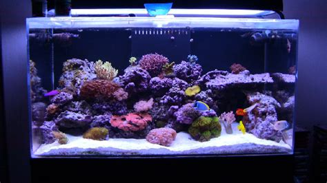 types of saltwater aquariums mad hatter s reef