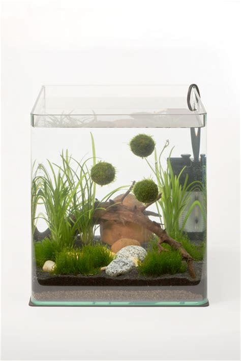 dennerle nano aquariophilie