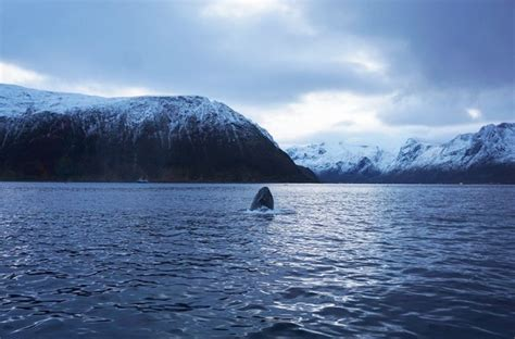 Rib Boat Whale Watching Tromso by Best Spot For Whale Watching And Northern Lights For Your