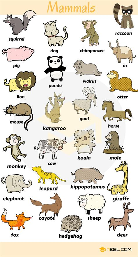 Animals Vocabulary In English  Pinterest  Zoos, Farming And Animal