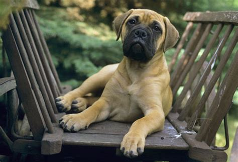 world tourism medium sized dogs
