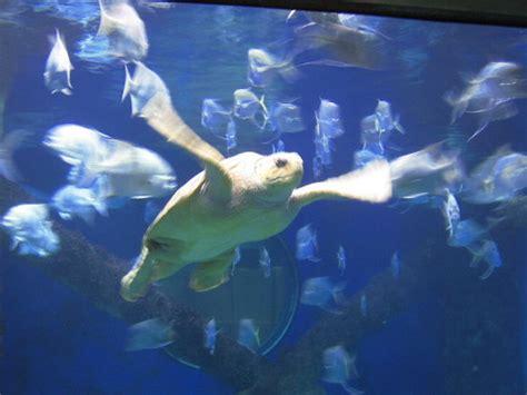 virginia aquarium marine science center virginia les avis sur virginia aquarium