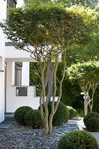 Baum Für Schattigen Vorgarten : toller baum f r den vorgarten die schirmform der baumkrone sollte definitiv in der ~ Markanthonyermac.com Haus und Dekorationen