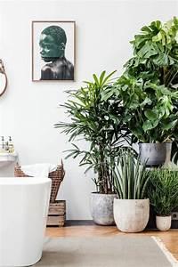 Pflanzen Für Wohnzimmer : inspirierende dekoideen kleiner innen gartenbereich ~ Markanthonyermac.com Haus und Dekorationen