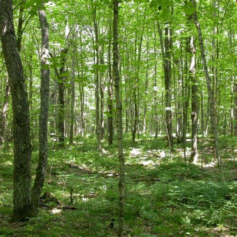 Uf Droughtinduced Changes In Forest Composition Amplify
