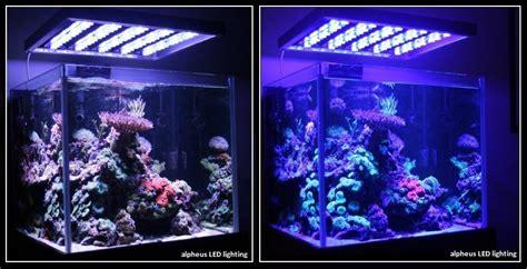 meduse eau douce aquarium 28 images les 25 meilleures id 233 es concernant aquarium design