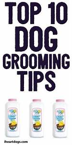 Dog grooming tips, Dog grooming and Dogs on Pinterest