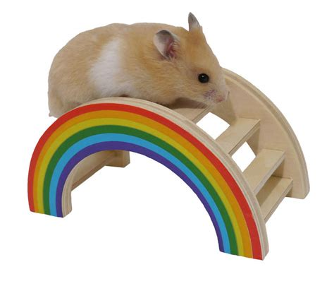 Speelgoed Hamster by Rainbow Play Bridge For Small Animals Hamster Gerbil