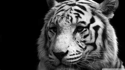 black and white pictures HD