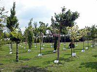 Dekorative Bäume Für Kleine Gärten : kleinkronige b ume f r kleine g rten landwirtschaftskammer nordrhein westfalen ~ Markanthonyermac.com Haus und Dekorationen