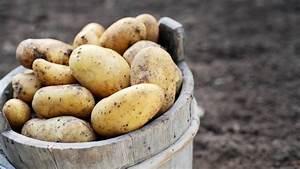 Kartoffeln Und Zwiebeln Lagern : kartoffeln richtig lagern und vor licht sch tzen ~ Markanthonyermac.com Haus und Dekorationen
