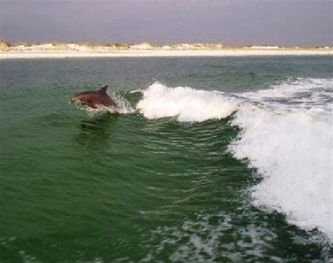Panama City Beach Speed Boat Rentals by A Pinch Of Sunset Picture Of The Sea Screamer Panama
