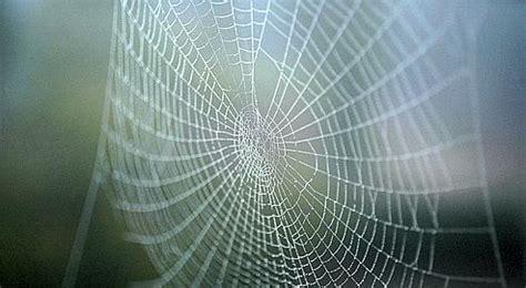les secrets de fabricationdes fils d araign 233 e