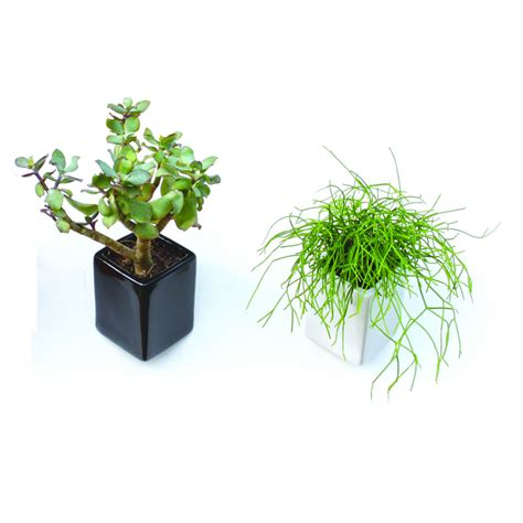 bathroom pot plants bathroom trends 2017 2018