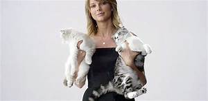 Taylor Swift's cats help promote her concert film ...