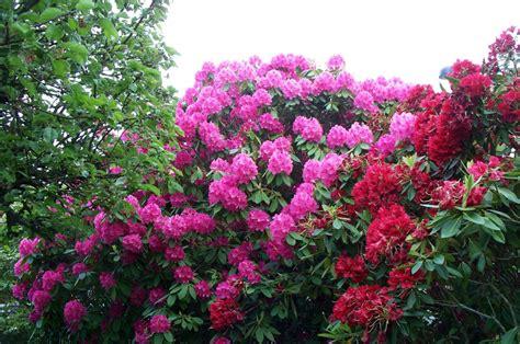 plantes exterieures hiver images