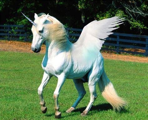 Unicorns History, Magic, Myth And Symbolism Thinkaboutit