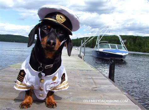 Dog Boat Captain by Introducing Captain Crusoe Crusoe The Celebrity Dachshund