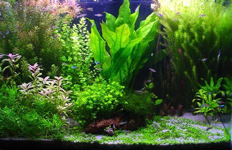 l entretien de l aquarium aquapoisson canalblog