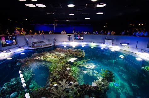 the 12 best aquariums in the u s for 2017 tripping