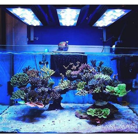 image gallery reef aquascaping