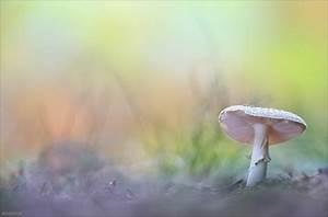 Was Sind Pastellfarben : pastellfarben forum f r naturfotografen ~ Markanthonyermac.com Haus und Dekorationen