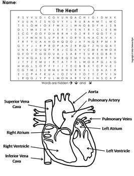 Human Body Systems Word Search The Heart And Circulatory System Worksheet