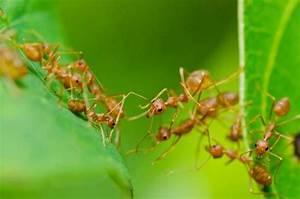 Mittel Gegen Rote Ameisen : ameisen im garten und im rasen vertreiben ~ Whattoseeinmadrid.com Haus und Dekorationen