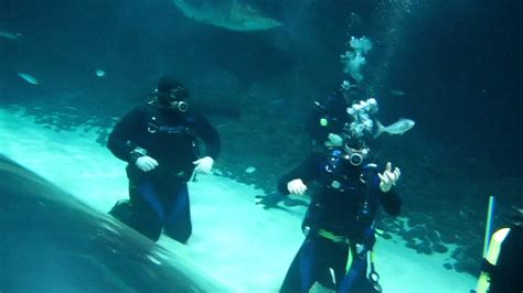 U Boat Watch Nz by Shark Dive Extreme At Kelly Tarltons Underwater World In