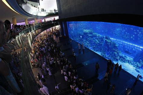 dubai aquarium underwater zoo awarded certificate of excellence by world s largest travel