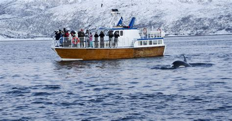 Fjord Queen Tromso by Polar Whale And Sea Bird Safari By Boat From Troms 248