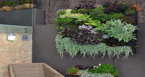 comment planter et entretenir la succulente