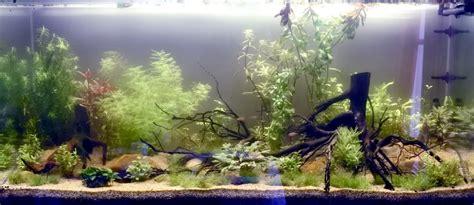 l aquarium naturel plant 233 pour les nuls