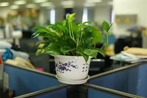 Feng Shui Pflanzen Reichtum : pflanzen als wichtige motivationshelfer im b ro ~ Markanthonyermac.com Haus und Dekorationen