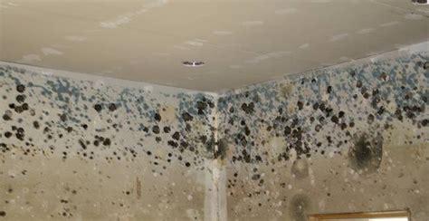 comment traiter la moisissure sur les murs