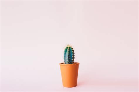 Free photo: Plant, Cactus, Background   Free Image on Pixabay   1985874