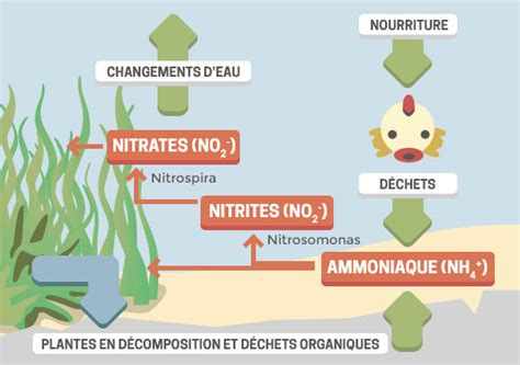 aquarium comment mettre en place le cycle de l azote la gazette d animal valley