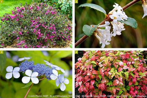 20 plantes faciles pour tous les jardiniers d 233 tente jardin