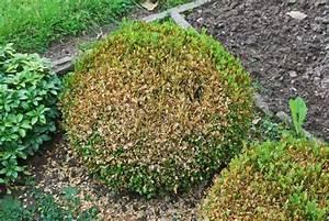 Haus Finden Tipps : buchsbaumz nsler bek mpfen 5 tipps die wirklich helfen ratgeberzentrale ~ Markanthonyermac.com Haus und Dekorationen