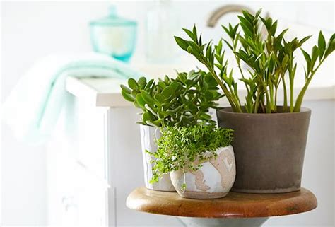 the 6 best plants for your bathroom p g everyday p g everyday united states en