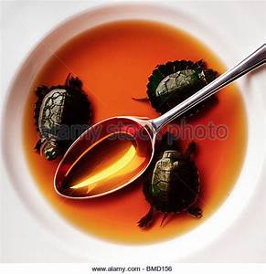 Slider Turtle Stock Photos & Slider Turtle Stock Images ...