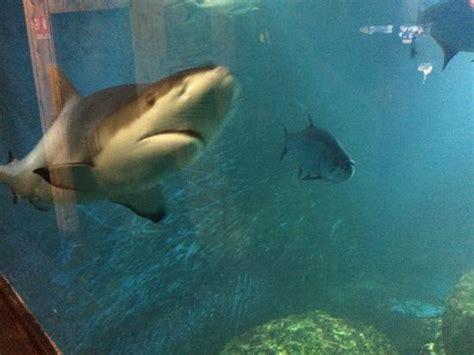 aquarium d amneville picture of aquarium d amneville amneville tripadvisor