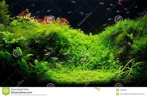 aquarium d eau douce de nature dans le type de takasi amano image stock image 17836941