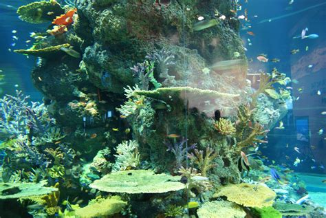 file strait of malacca and andaman sea s e a aquarium marine park resorts world sentosa